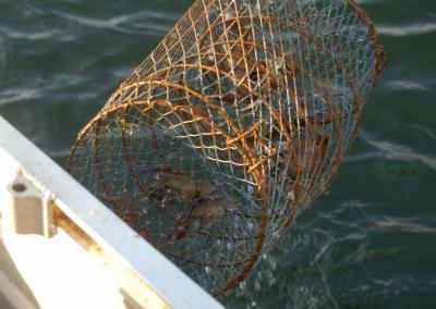 Kräftbur på Torpa Gårds fiskevatten