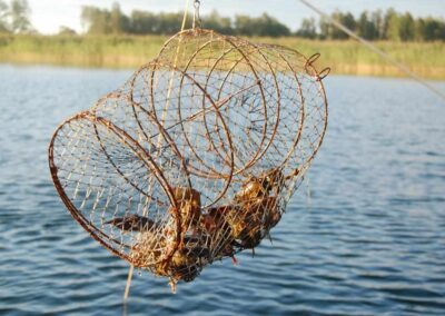 En kräftbur med levande kräftor hänger i luften, i bakgrunden finns vass.